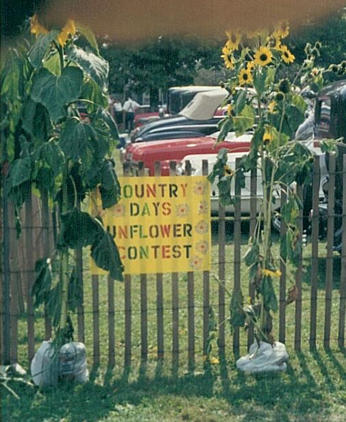 2000sunflowergrowingcontest.jpg
